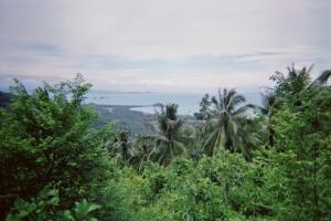 Samui - jungle